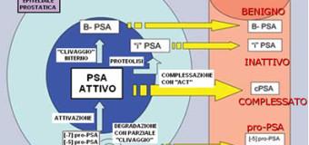 PSA libero e ratio: tumore alla prostata?