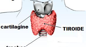 Anticorpi tiroidei alti, bassi e valori normali